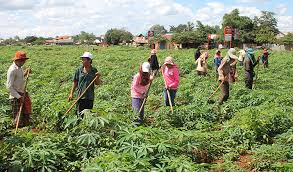 RDB urges farmers to create agricultural communities - Khmer Times