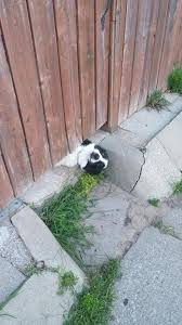 20 Funny Dogs Who Peek Under Fences To Say Hi
