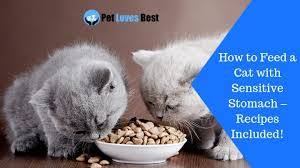 feed a cat with sensitive stomach