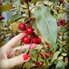 Какого числа будет Яблочный Спас 2019 • Из года в год