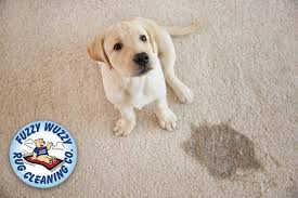 how to get dog out of carpet