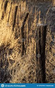 Rustic Fence Posts In Dry Autumn Grassy Meadow In California Valley Stock Image Image Of Bloom Blue 167941995