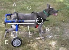 small dog wheelchair diy