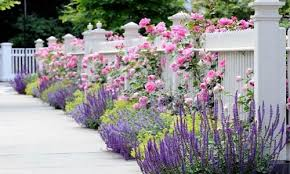 Walls Fences The Best Plants To Grow In Your Garden