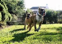 Diy Dog Run Save The Yard And Your Dog S Feet Myfixituplife