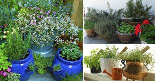 herb gardening creative things you can