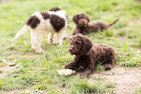 best dog breeders best places to