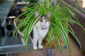 20 houseplants safe for cats and dogs