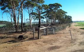No 1 Rabbit Proof Fence Wa