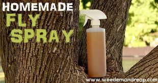 homemade fly spray