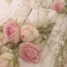 pastel rose wallpaper 38 pictures