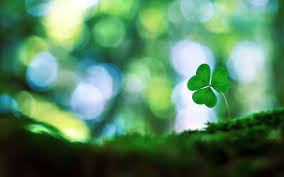 four leaf clover wallpapers 51 pictures