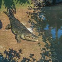 Saltwater Crocodile Planet Zoo Wiki Fandom