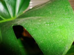 how to clean your houseplants our