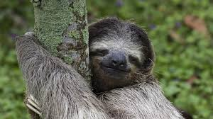 sloth wallpapers 22 images