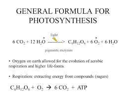 lecture 4 photosynthesis life s grand