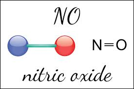 The Nitric Oxide Miracle Molecule — Integrative Medicine Solutions
