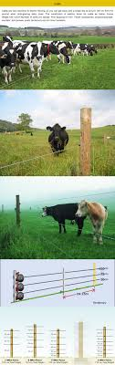Electric Fence Installation Guide For Beef And Dairy Cattle