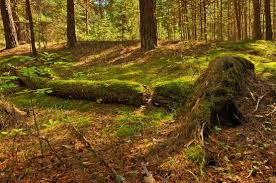 indian forest nature free stock photos