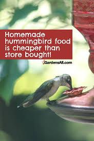 hummingbird food recipe and favorite