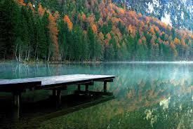 nature forest outdoor wilderness