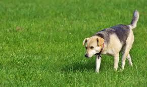 Invisible Pet Fence Saskatchewan Thefreedomfence Com