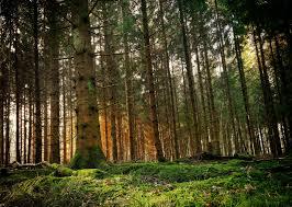 forest 4k wallpapers for your desktop