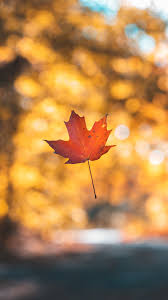 leaf maple autumn wallpaper 1080x1920