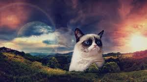 grumpy cat wallpapers top free grumpy