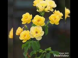 beautiful flowers images for whatsapp