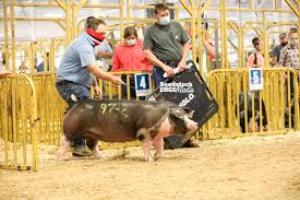 2020 The Midwestern Poland China Show | National Swine Registry