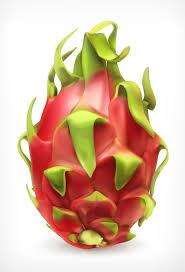 新鲜水果火龙果矢量素材