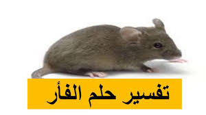 تفسير رؤية الفأر في المنام وقتله أو ضربه أو الخوف منه