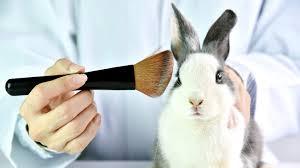cosmetics act to ban testing