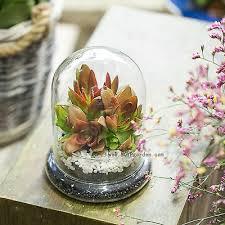 glass cloche dome cover terrarium