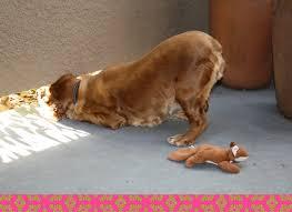 wednesdays winnie quotes dog lovers blog art dogs