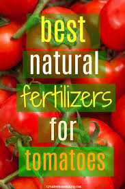 best natural fertilizer for tomatoes