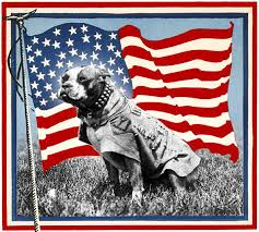 Image result for trained military dogs word