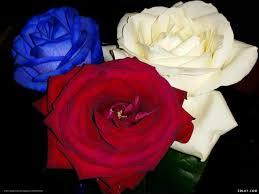صور اجمل ورد اجمل الصور المعبرة عن الورود صباح الورد