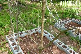 diy trellis ideas for growing a