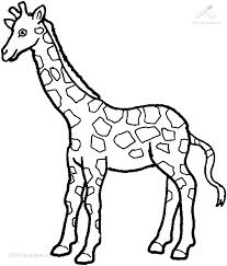 Kleurplaat Dieren Giraffe Kleurplaat Giraffe