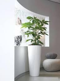 new tall indoor plant pots father of