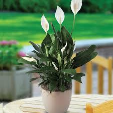 8 fuss free indoor plants for eco