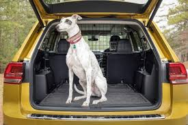 12 outstanding cars designed for dogs