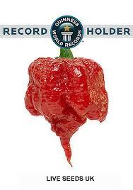 Super Hot 100% GENUINE Carolina Reaper Chilli Pepper Seeds X 10 ...