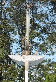Don S Squirrel Proof Bird Feeder Pole