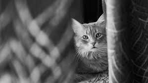 Gambar : foto, cambang, kecil untuk kucing berukuran sedang, hitam ...
