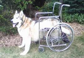dog wheelchair and cart parisons