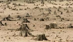 Adio, Padurea Baneasa: Peste 700 de hectare, defrisate pentru un ...
