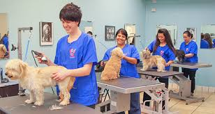 Top 10 Reasons To Become A Dog Groomer - Dog Grooming School - Pet ...